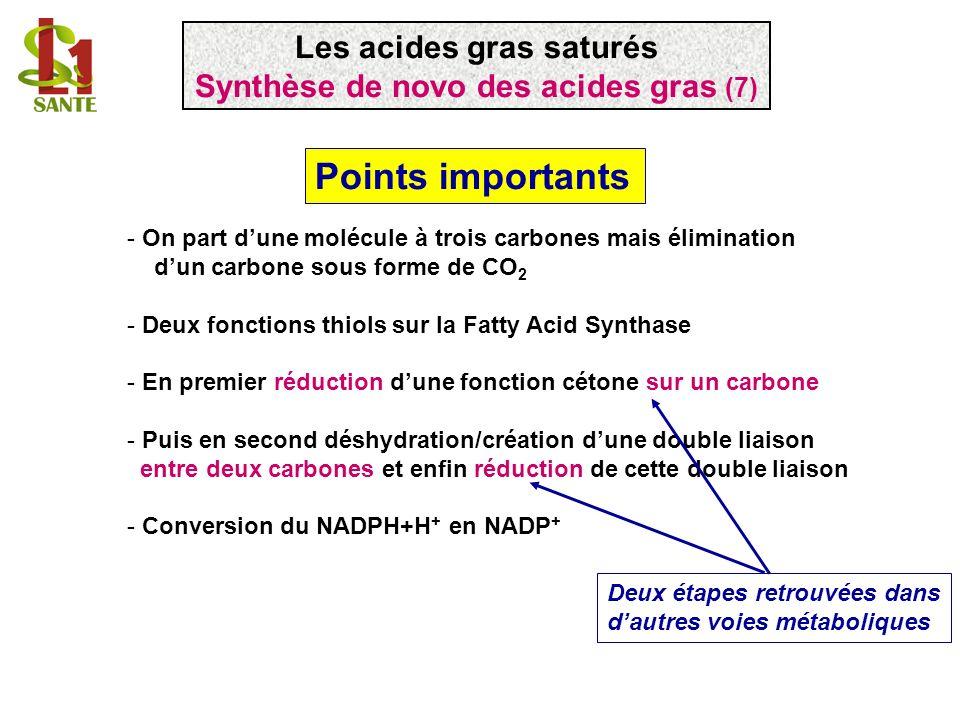 Les acides gras saturés Synthèse de novo des acides gras (7)