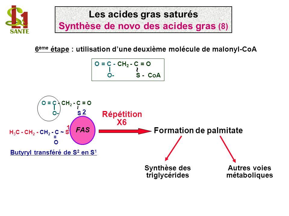 Les acides gras saturés Synthèse de novo des acides gras (8)