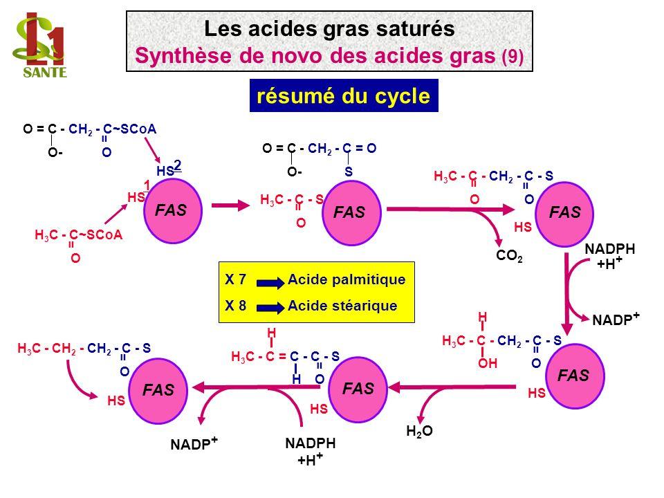 Les acides gras saturés Synthèse de novo des acides gras (9)