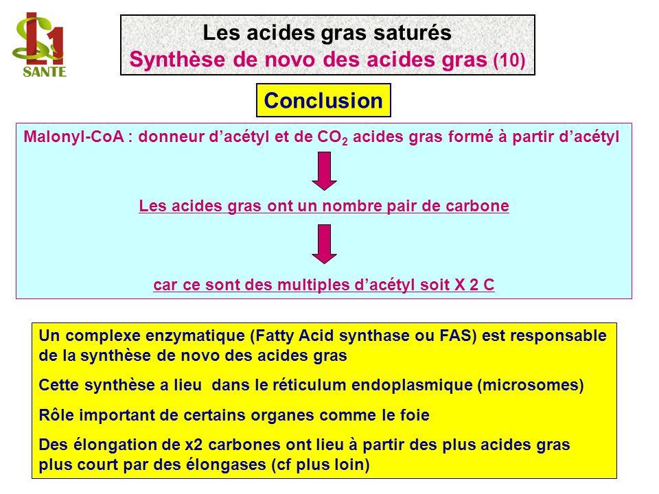 Les acides gras saturés Synthèse de novo des acides gras (10)