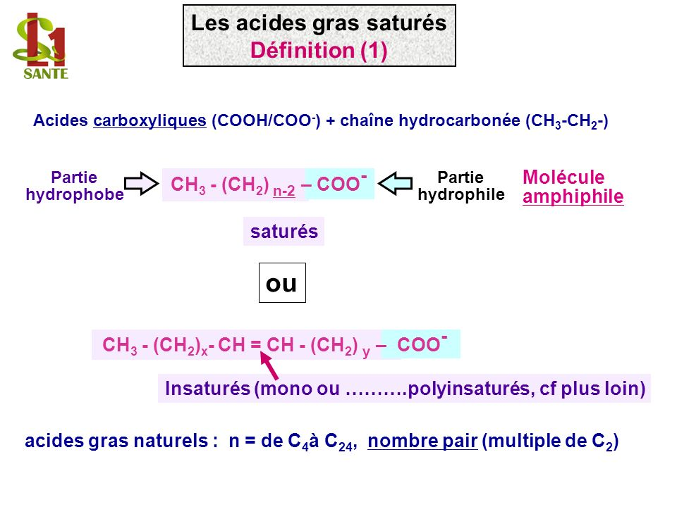 ou Les acides gras saturés Définition (1) Molécule
