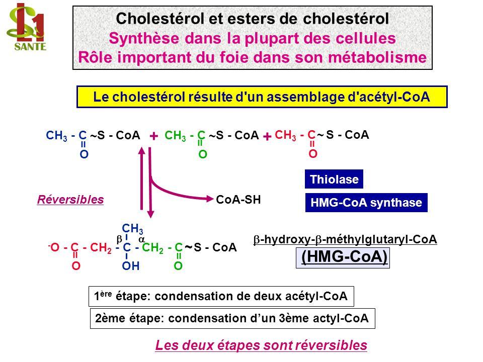 Cholestérol et esters de cholestérol (HMG-CoA)