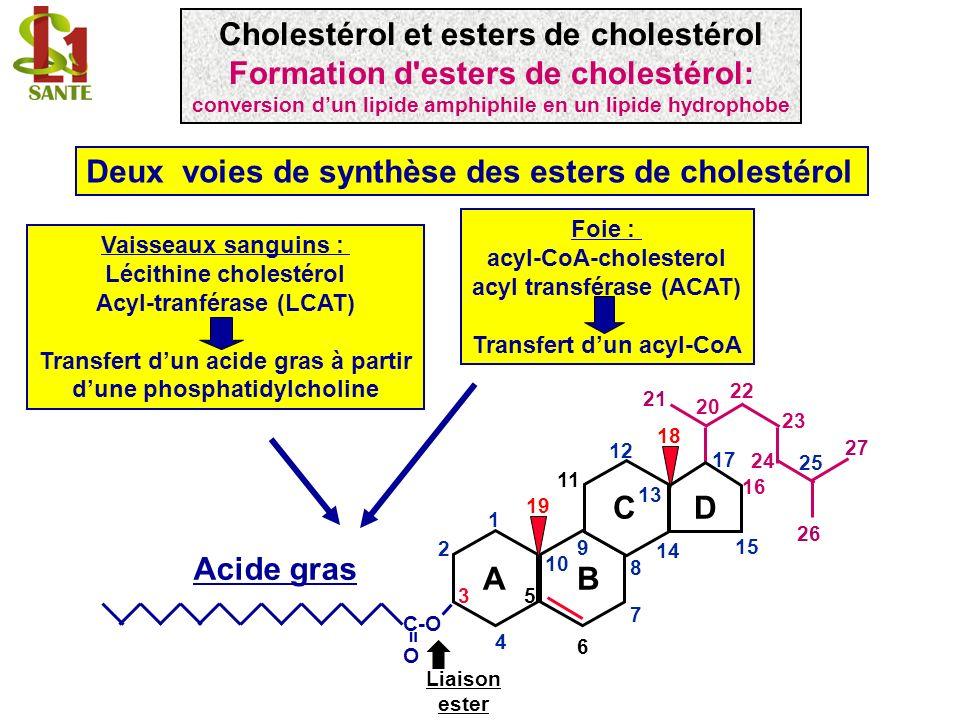 Cholestérol et esters de cholestérol