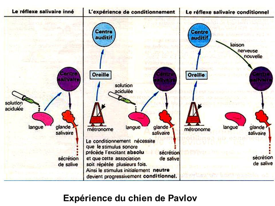 Expérience du chien de Pavlov