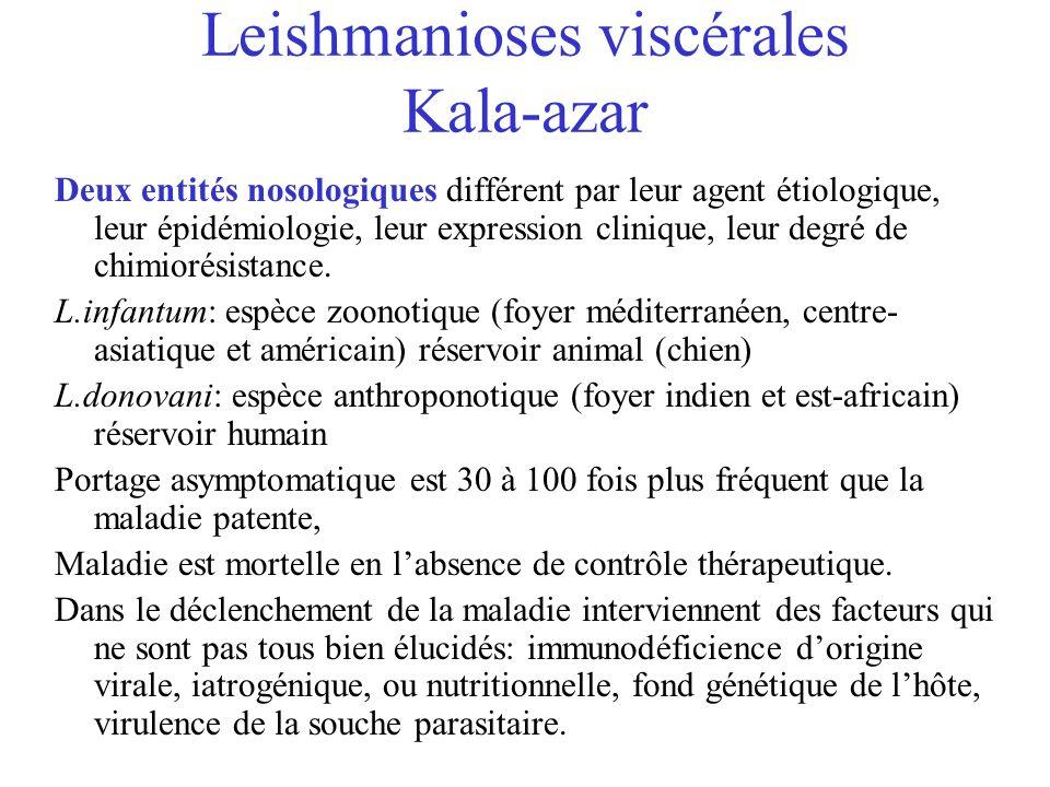 Leishmanioses viscérales Kala-azar
