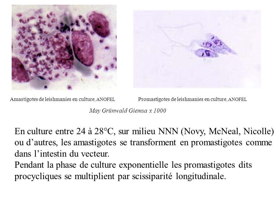 1 - Agent pathogène Liste des cours Leishmanioses