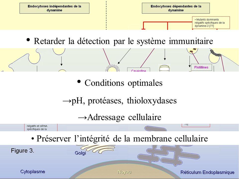 Retarder la détection par le système immunitaire