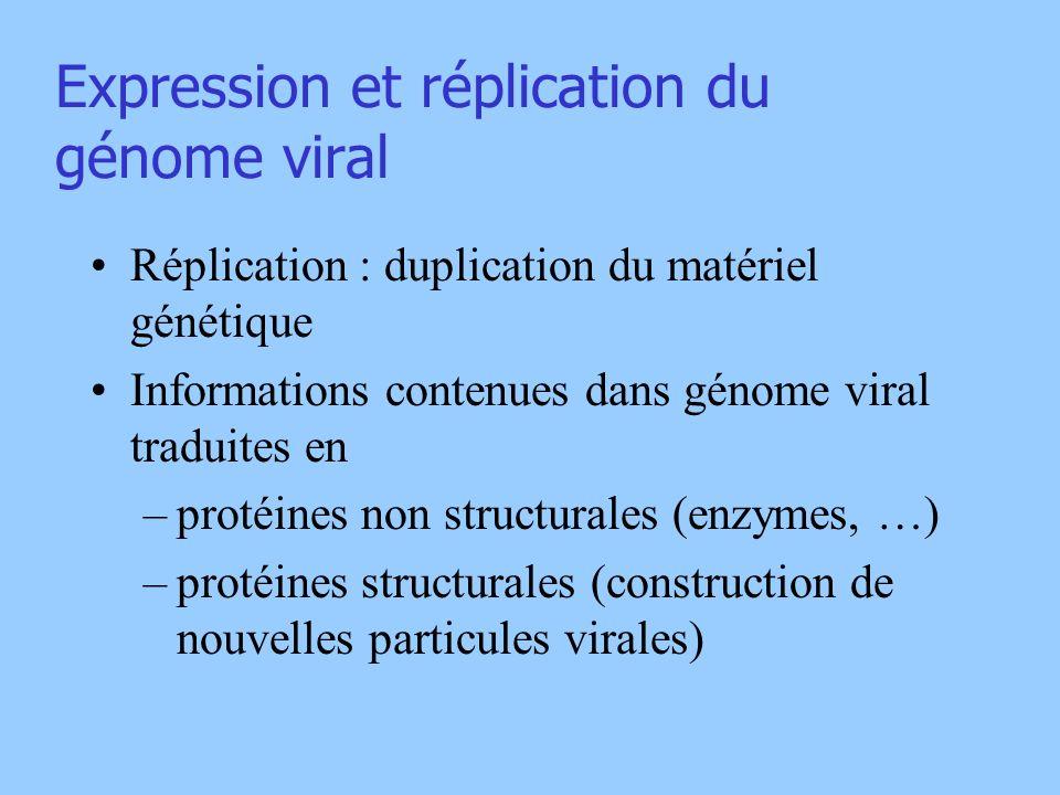 Expression et réplication du génome viral