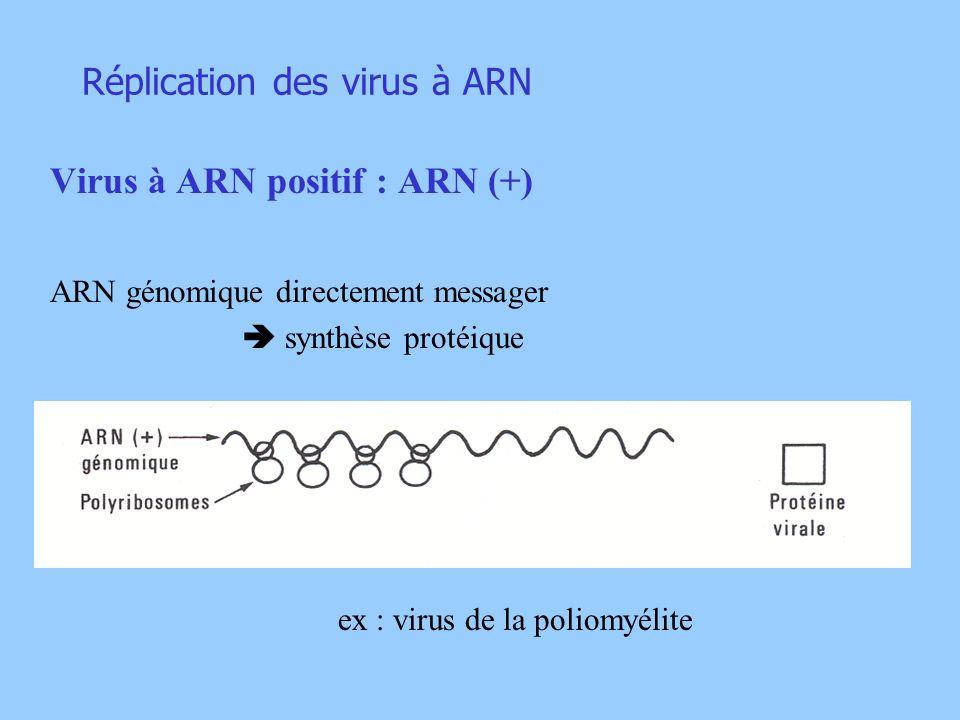 Réplication des virus à ARN