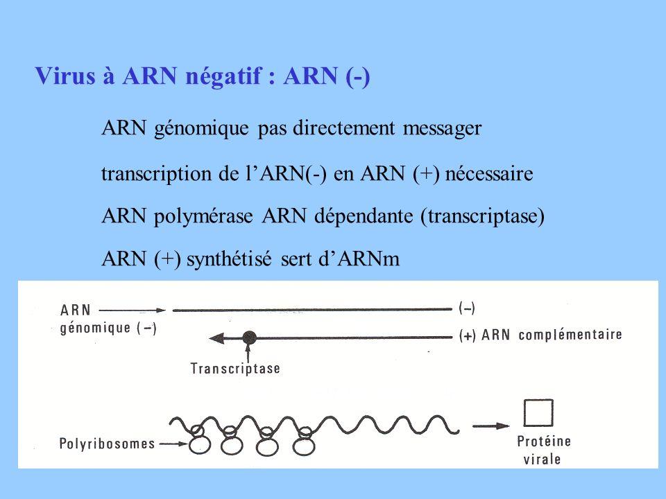 ARN génomique pas directement messager