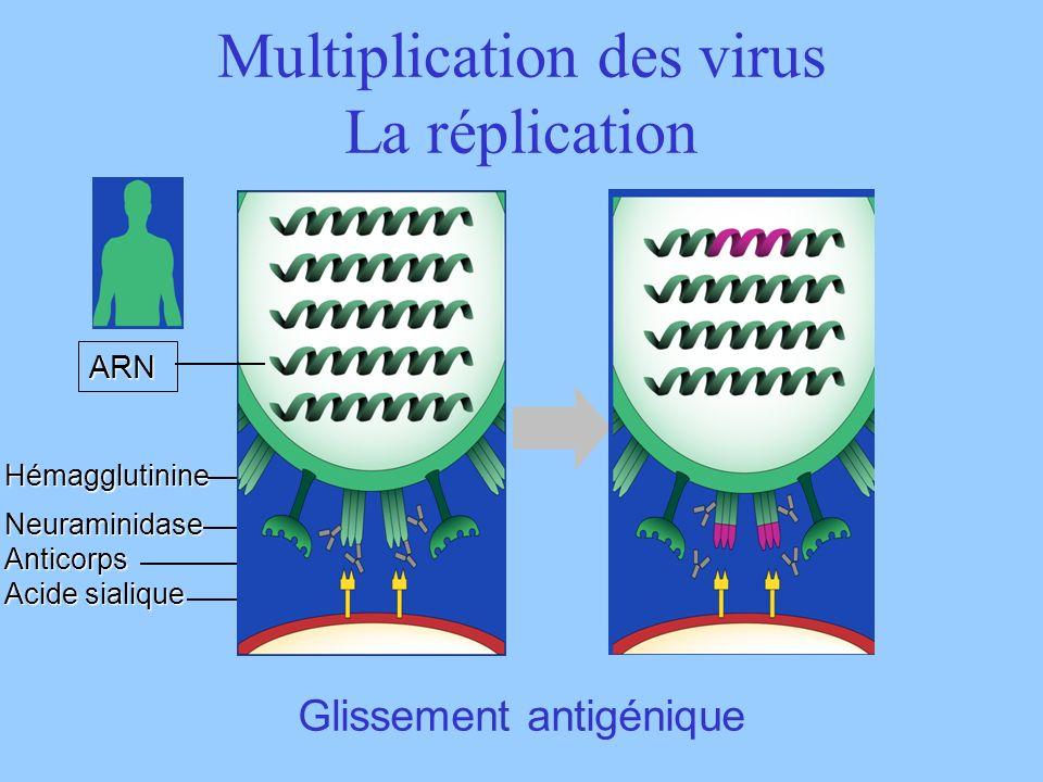 Multiplication des virus La réplication