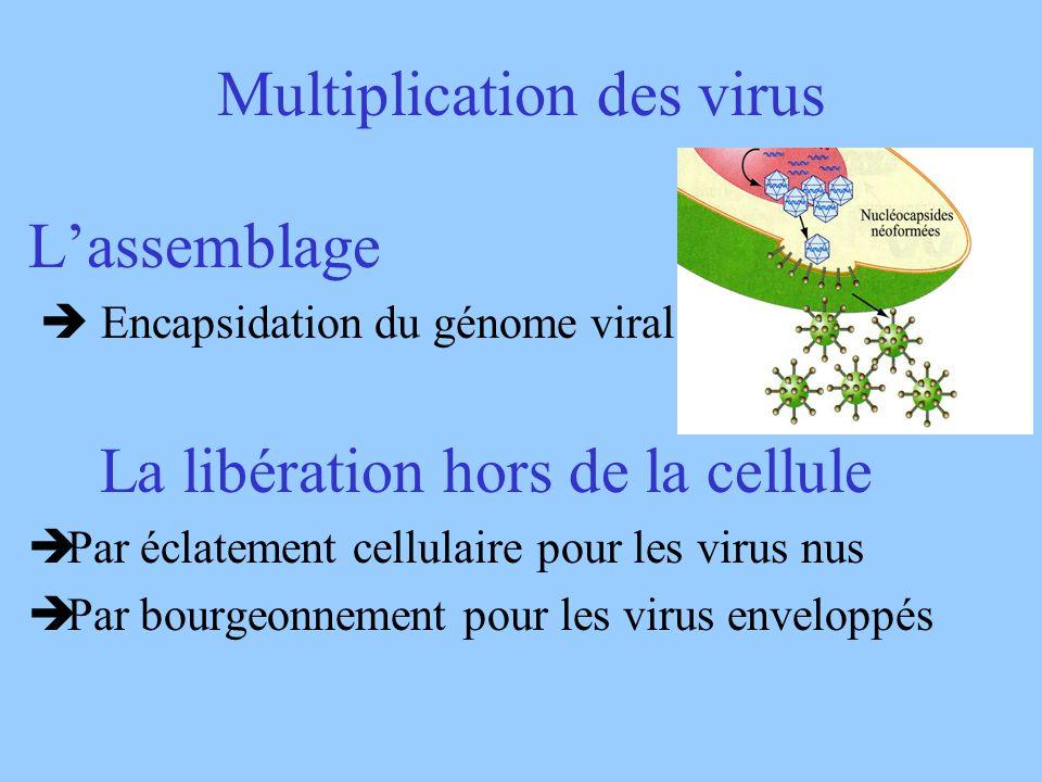 Multiplication des virus