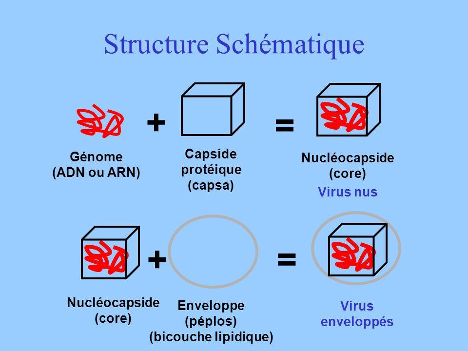Structure Schématique