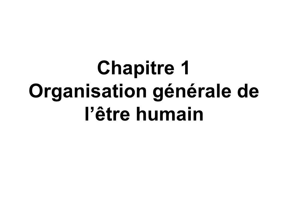 Chapitre 1 Organisation générale de l'être humain