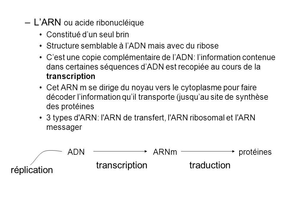 L'ARN ou acide ribonucléique