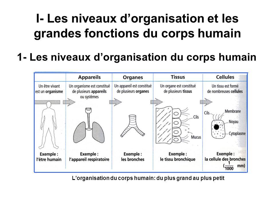 I- Les niveaux d'organisation et les grandes fonctions du corps humain
