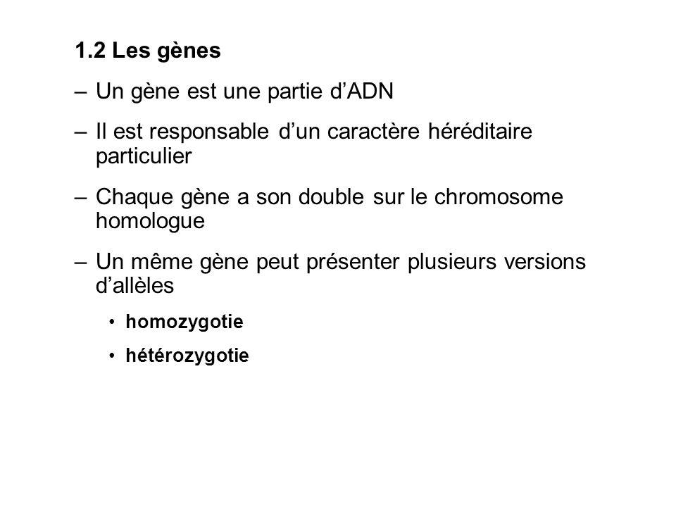 Un gène est une partie d'ADN