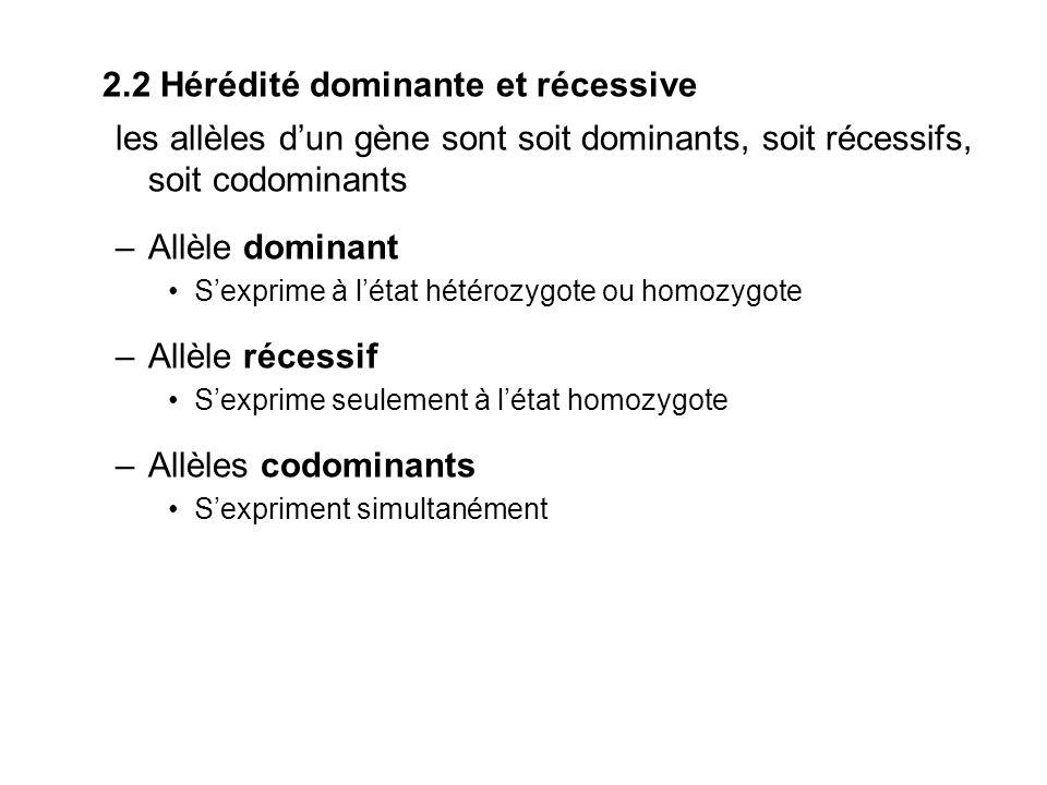 2.2 Hérédité dominante et récessive