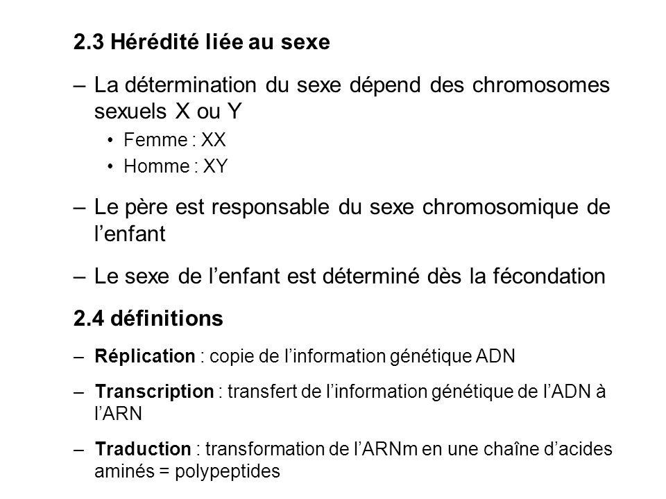 La détermination du sexe dépend des chromosomes sexuels X ou Y