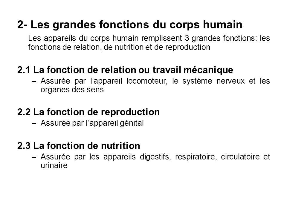 2- Les grandes fonctions du corps humain