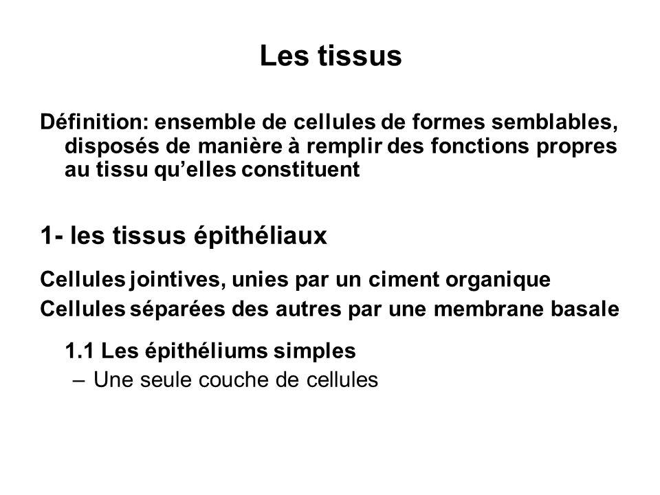 Les tissus 1- les tissus épithéliaux