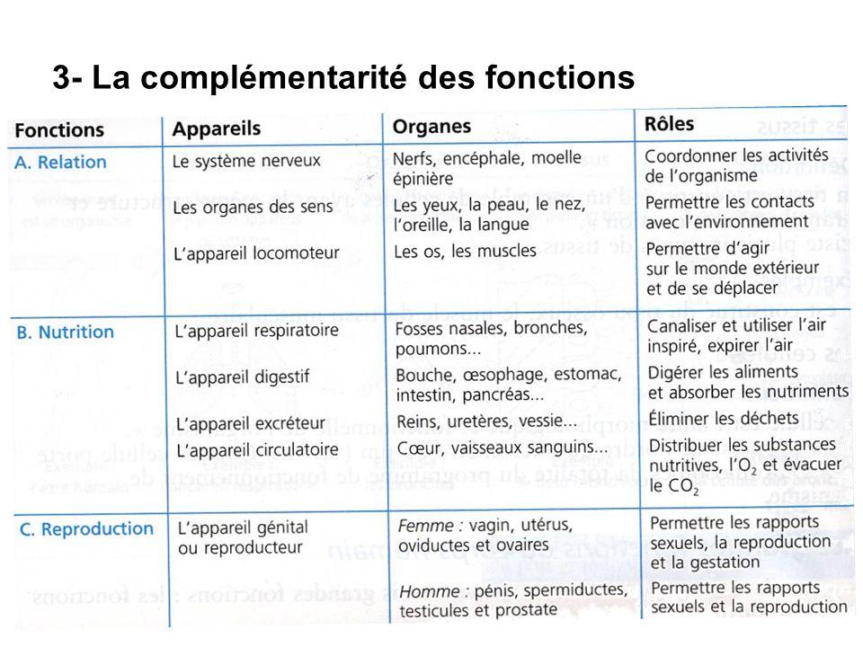 3- La complémentarité des fonctions