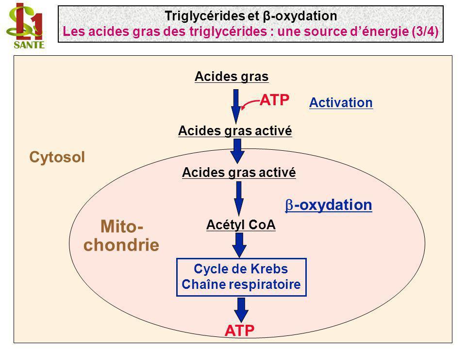 Mito- chondrie ATP Cytosol b-oxydation ATP