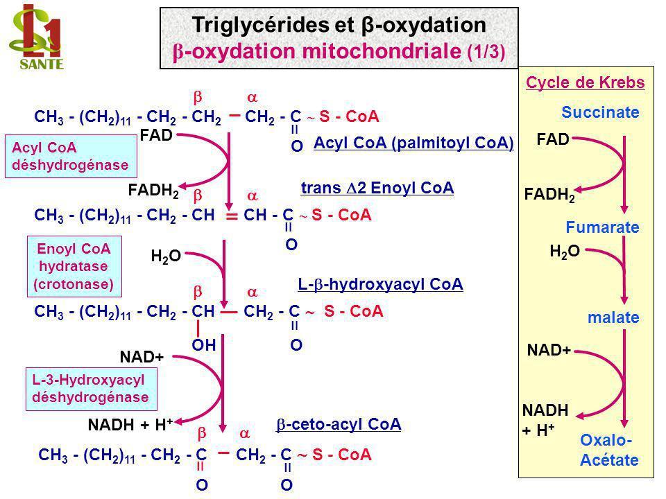 Triglycérides et β-oxydation β-oxydation mitochondriale (1/3)
