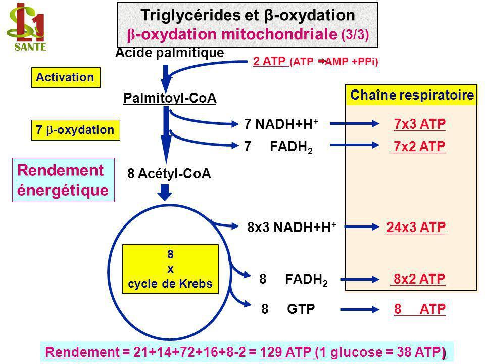 Triglycérides et β-oxydation β-oxydation mitochondriale (3/3)