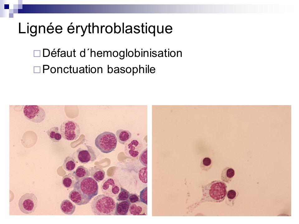Lignée érythroblastique
