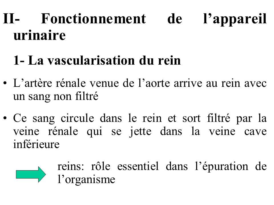 II- Fonctionnement de l'appareil urinaire