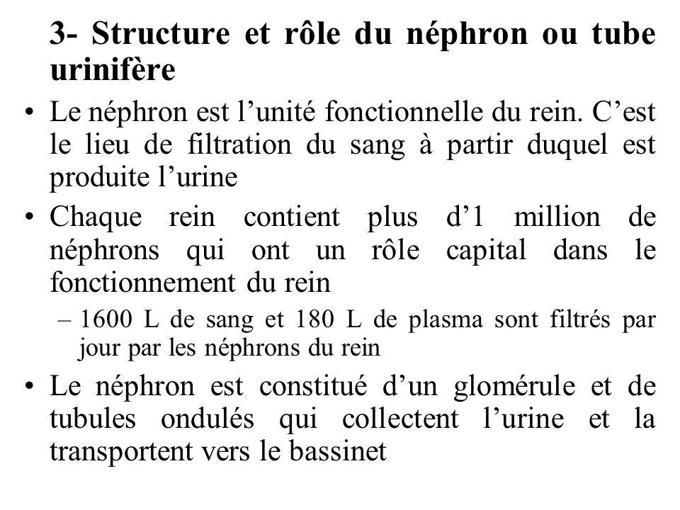 3- Structure et rôle du néphron ou tube urinifère
