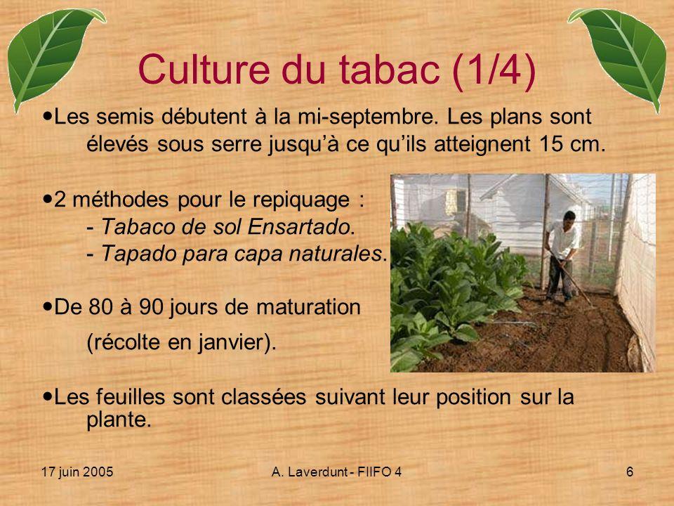 Culture du tabac (1/4) Les semis débutent à la mi-septembre. Les plans sont élevés sous serre jusqu'à ce qu'ils atteignent 15 cm.