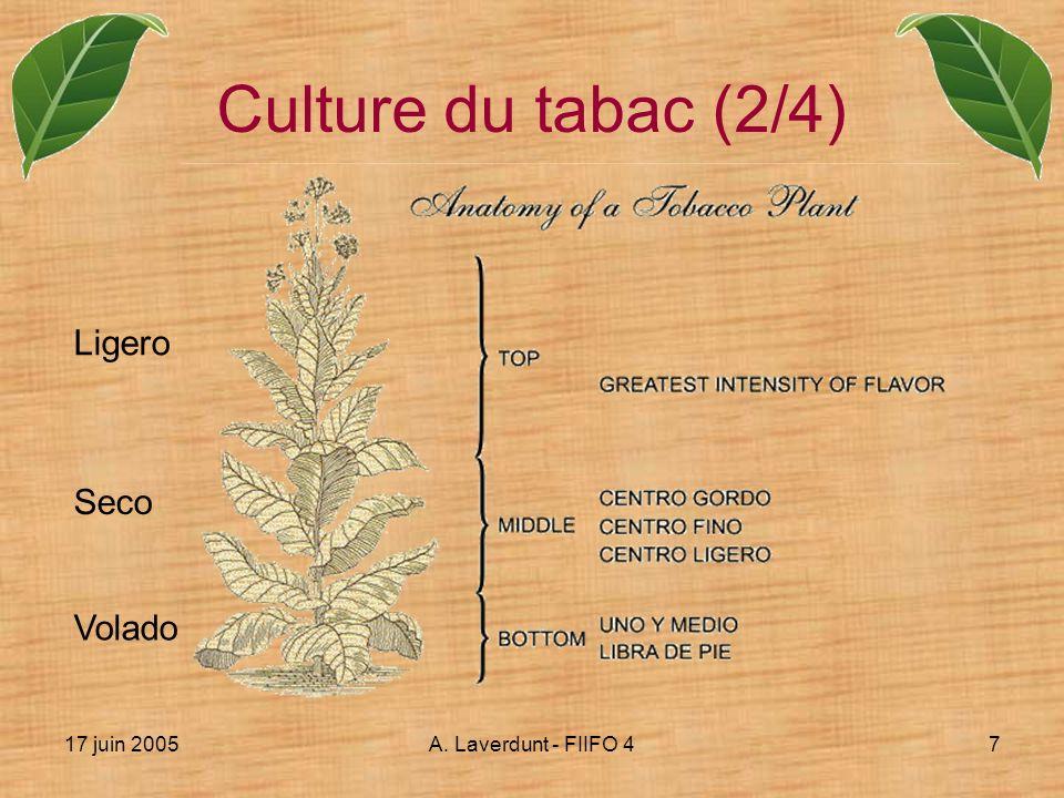 Culture du tabac (2/4) Ligero Seco Volado 17 juin 2005