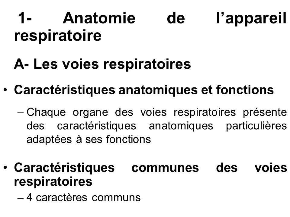 1- Anatomie de l'appareil respiratoire A- Les voies respiratoires