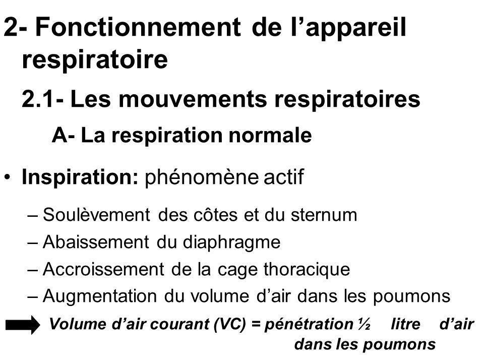 2- Fonctionnement de l'appareil respiratoire