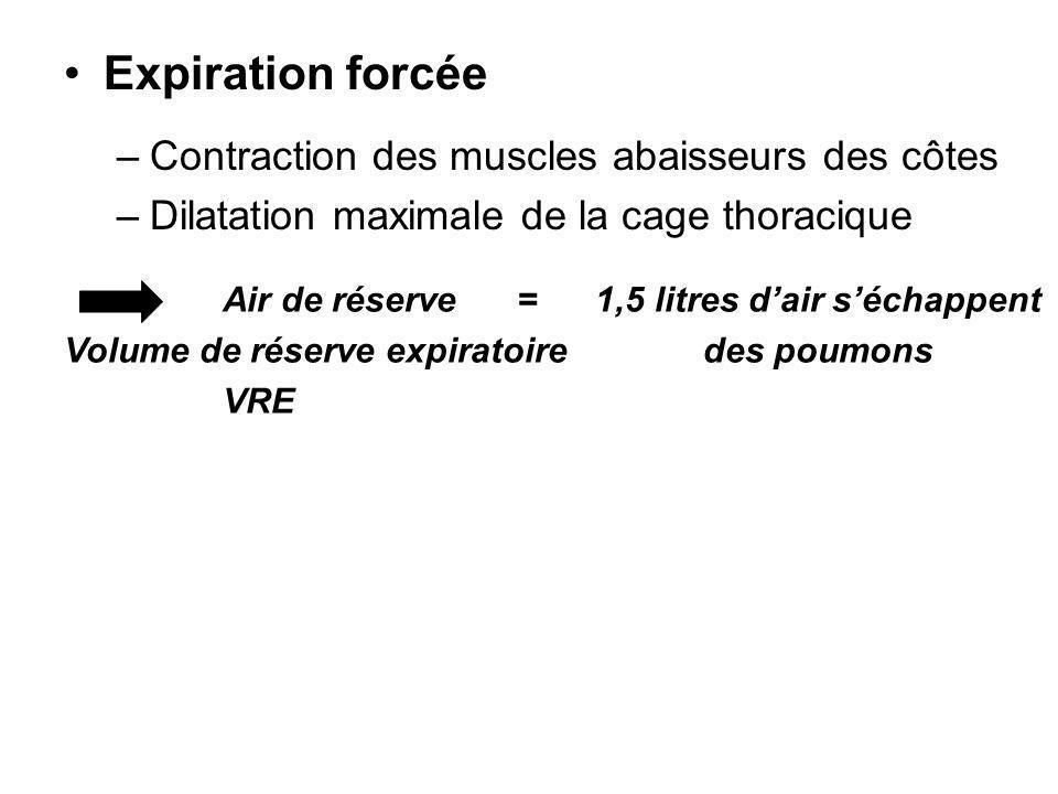 Expiration forcée Contraction des muscles abaisseurs des côtes
