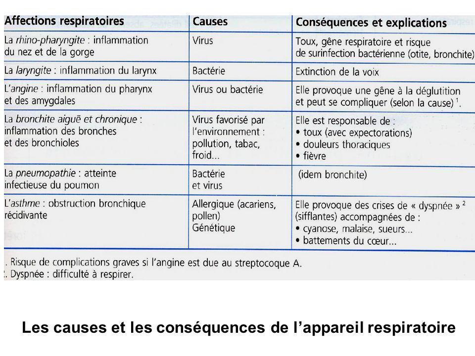 Les causes et les conséquences de l'appareil respiratoire