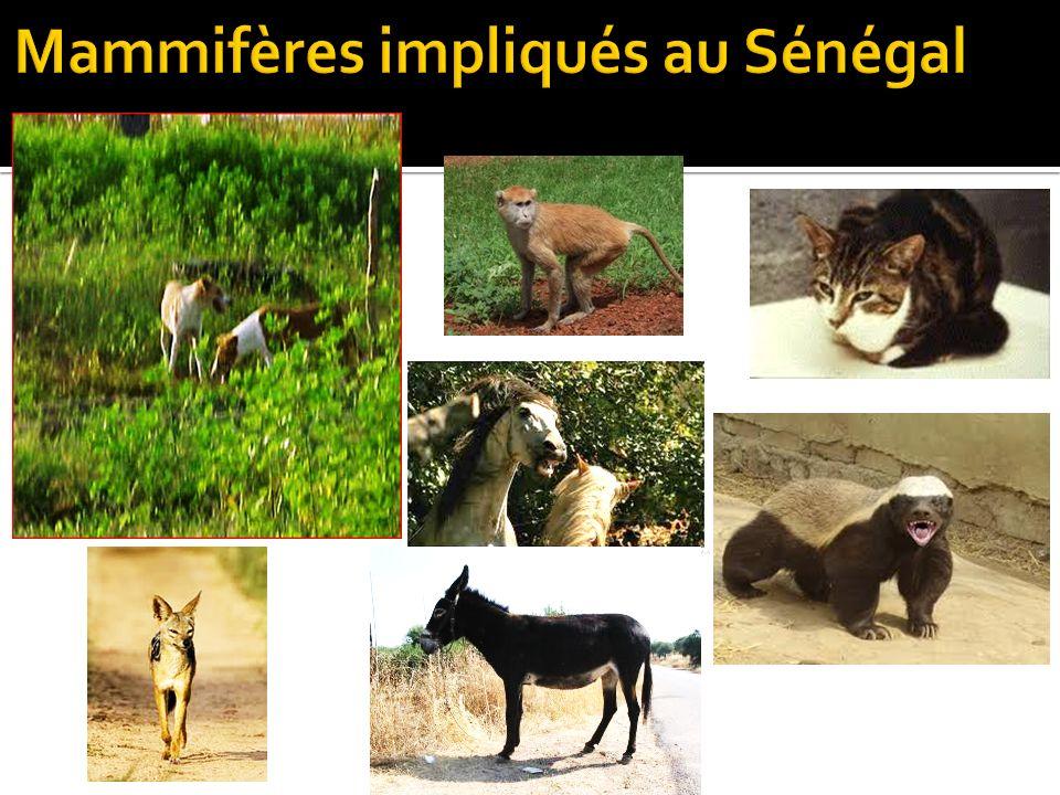 Mammifères impliqués au Sénégal