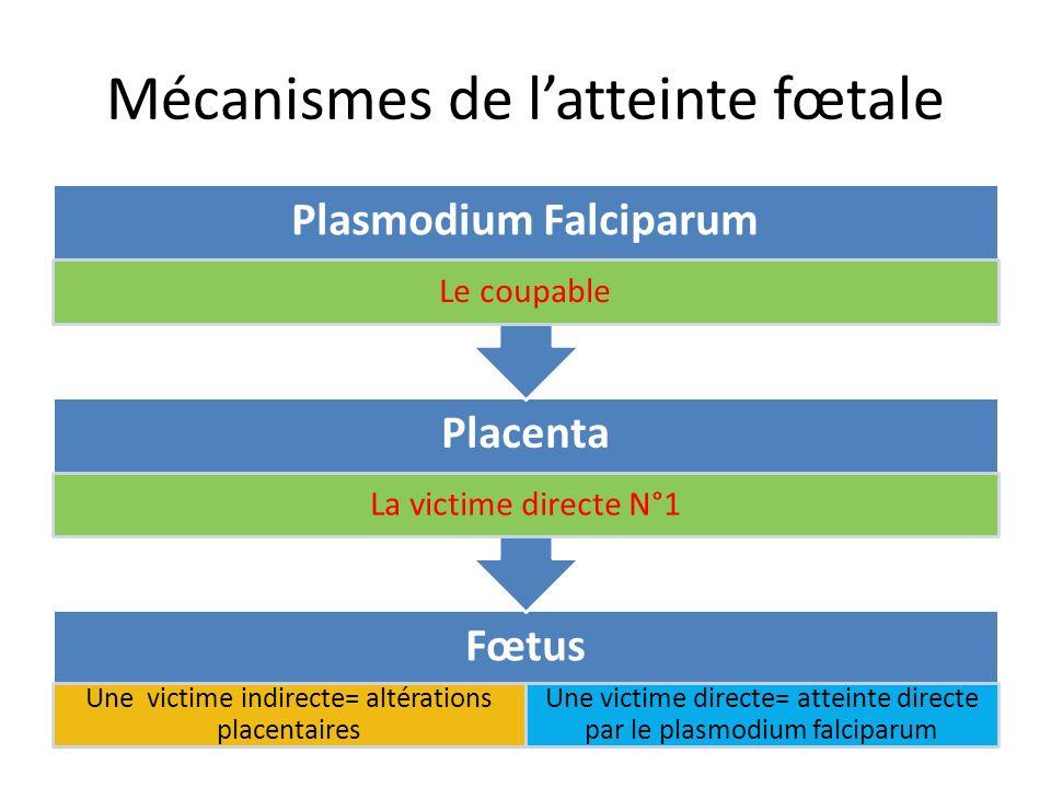 Mécanismes de l'atteinte fœtale