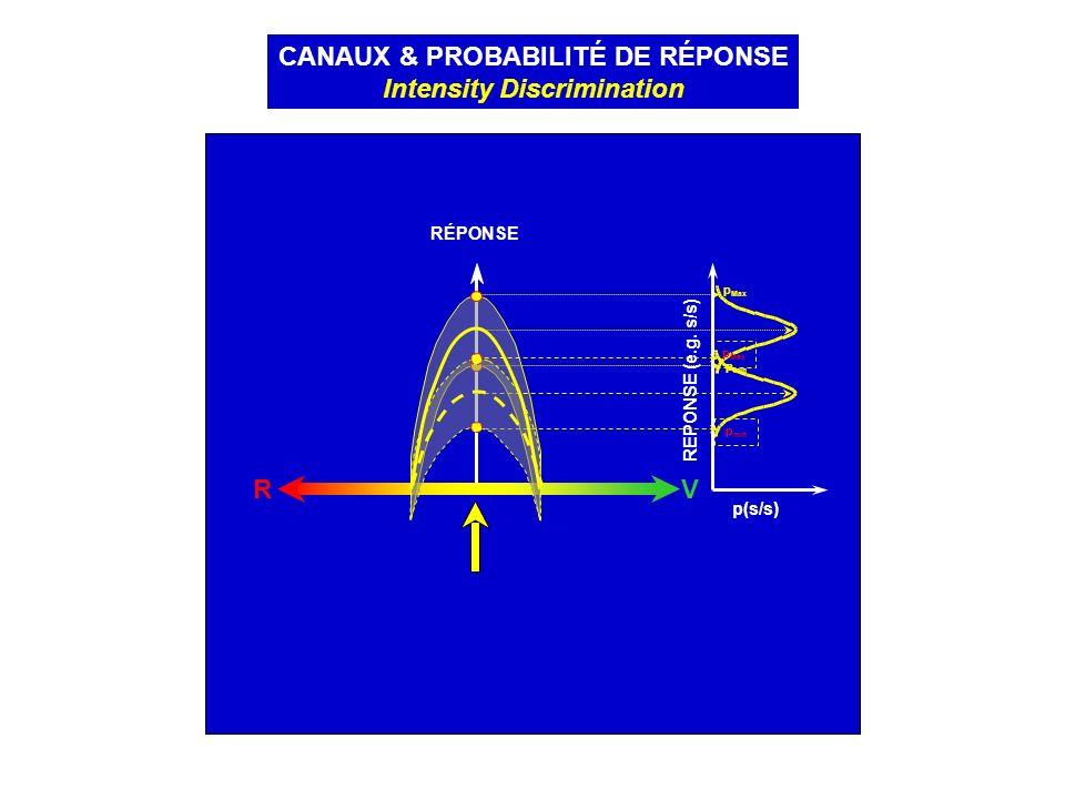CANAUX & PROBABILITÉ DE RÉPONSE Intensity Discrimination