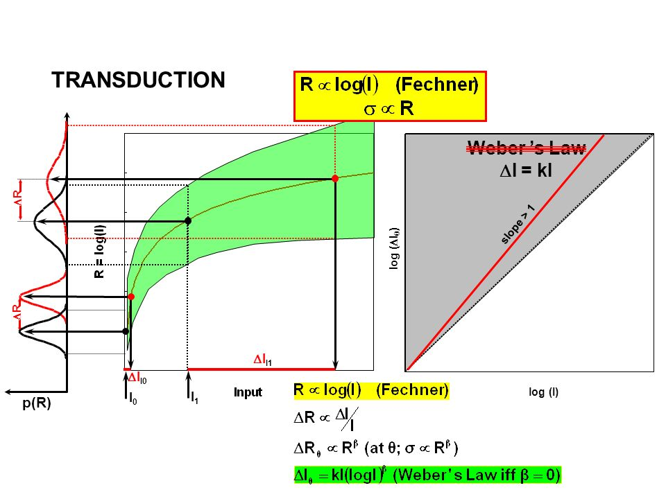 TRANSDUCTION Weber 's Law DI = kI p(R) DII1 DII0 I0 I1 DR slope > 1