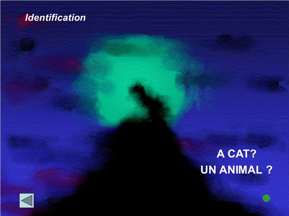 A CAT Identification UN ANIMAL
