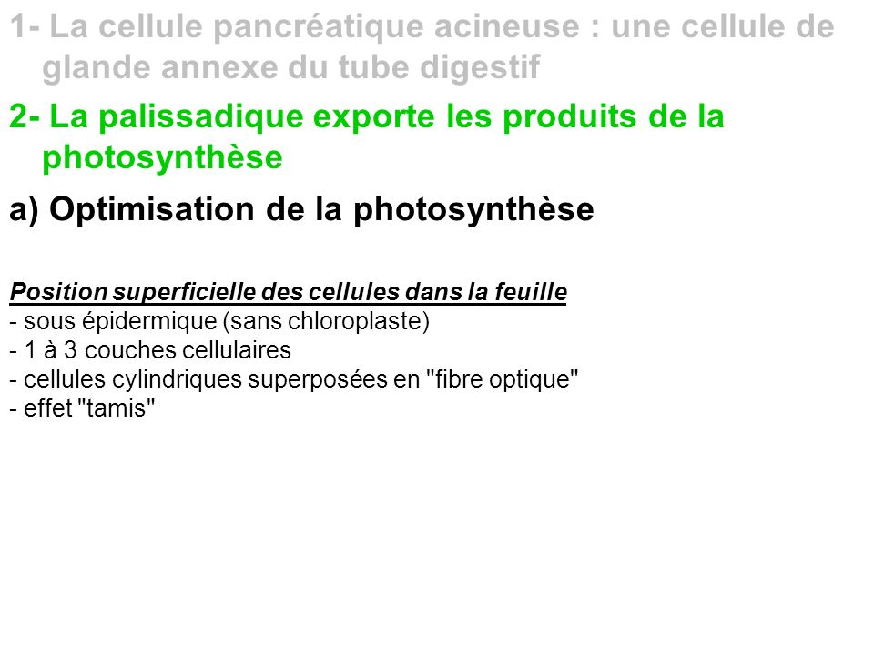 2- La palissadique exporte les produits de la photosynthèse