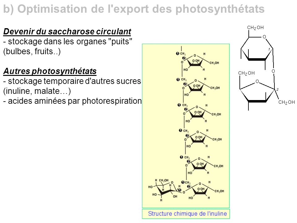 b) Optimisation de l export des photosynthétats