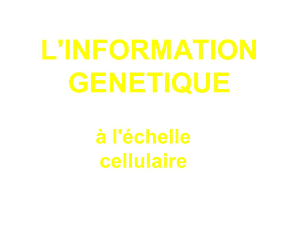 L INFORMATION GENETIQUE
