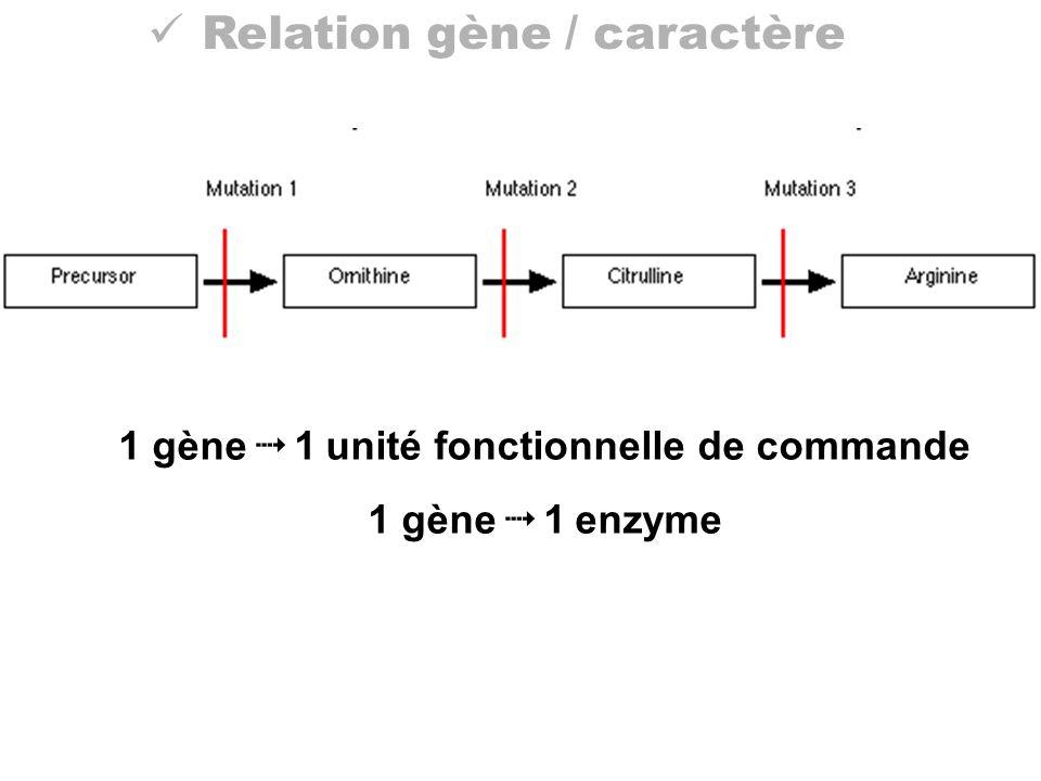 1 gène  1 unité fonctionnelle de commande