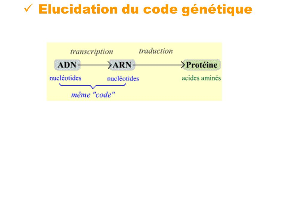 Elucidation du code génétique
