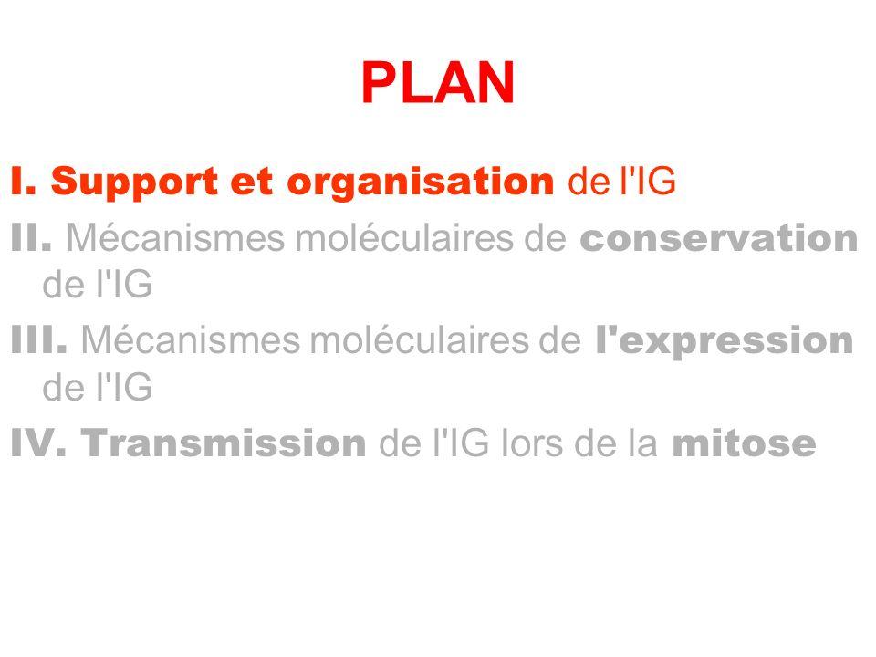 PLAN I. Support et organisation de l IG