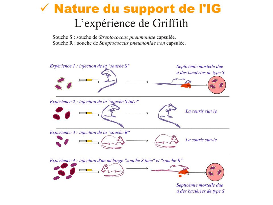 Nature du support de l IG